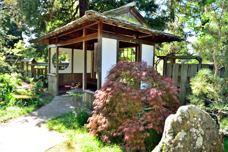 Tranquility At Merritt Gardens 2 Oakland, Ca. Merritt Gardens Hidden Gems  Lakeside Park Japanese Garden Seating Area Built Structure Japanese Architecture Redwood Trees Boulder Schrubs Walkway Fence Quiet Places Shaded Landscape_Collection Landscape_photography Scenic Tranquil