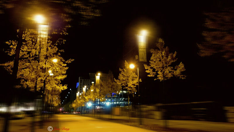 Night Illuminated No People Tree Outdoors City Fineart Bare Tree Tree Trunk EyeEm Gallery EyeEm The Bes EyeEm The Best Shots New Talents On EyeEm New Talents The Week Of Eyeem Taking Photos Getting Inspired Our Best Pics Caught In The Moment Caught The Moment Night Photography Nightlights City Street City Light Lighting Equipment The City Light