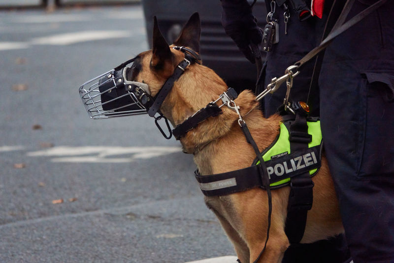 Police dog standing on road in city
