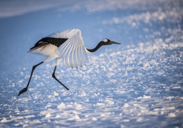 Side view of bird flying in snow