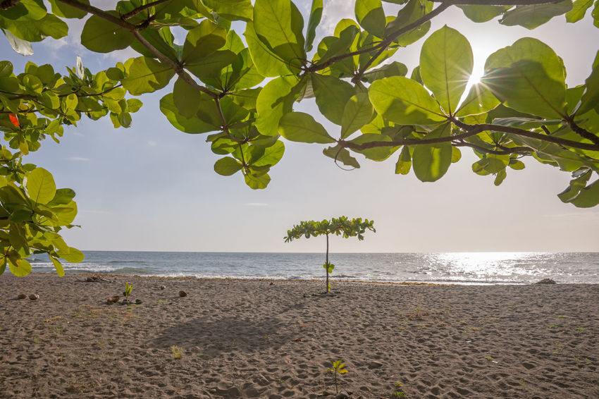 Tropical beach on the island of Dominica in the Caribbean Dominica Tropical Paradise Beach Beauty In Nature Carribbean Empty Growth Horizon Horizon Over Water Island Land Leaf Nature No People Outdoors Plant Plant Part Scenics - Nature Sea Sky Tranquil Scene Tranquility Tree Water