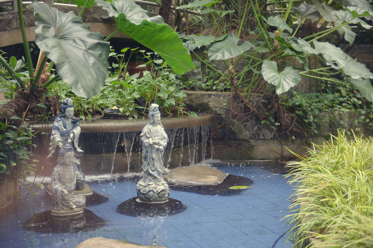 Adapted To The City City Garden City Gardens Day EyeEm Nature Lover Eyeem Philippines Garden Garden Photography Indoor Garden Outdoors