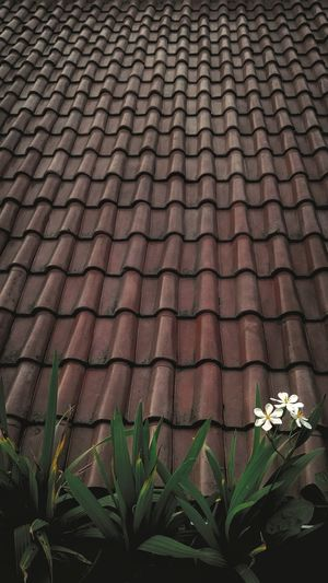 Low angle view of flowering plants on roof