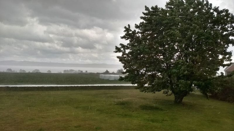 Summer In My Garden Landscape Rainy Day Cherry Tree Lake View Outdoors Tree Nature Beauty In Nature Tranquility Scenics Sky And Clouds