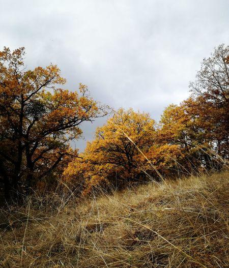 Hungary ősz Természet Nature Forest Photography Nature Landscape Myphoto MyPhotography