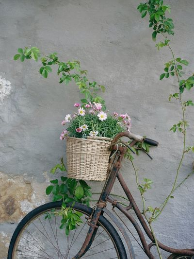an old rusty bycicle with a baket full of flowers against a wall near Rosenheim, Germany Bavaria Wall Basket Bicycle Day Flower Freshness Glowerslovers Growth Leaf Nature No People Outdoors Plant Rusty