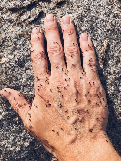 Ants Bite Body Part Bugs Close-up Day Dirt Dirty Finger Hand High Angle View Human Body Part Human Finger Human Hand Human Limb Insects  Land Leisure Activity Lifestyles Messy Nature One Person Personal Perspective Real People Unrecognizable Person