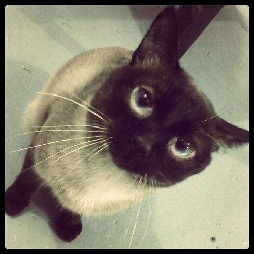 Cats Cat Eyeblue *---*