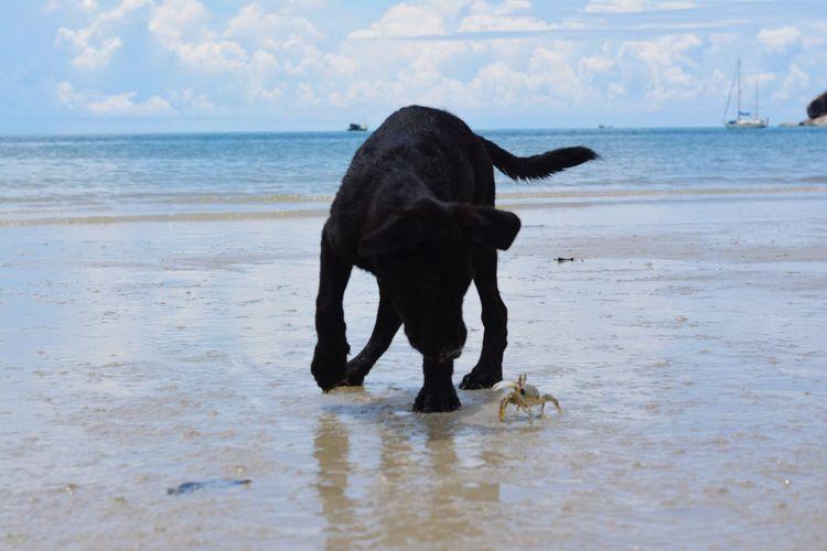 Water Dog Sea