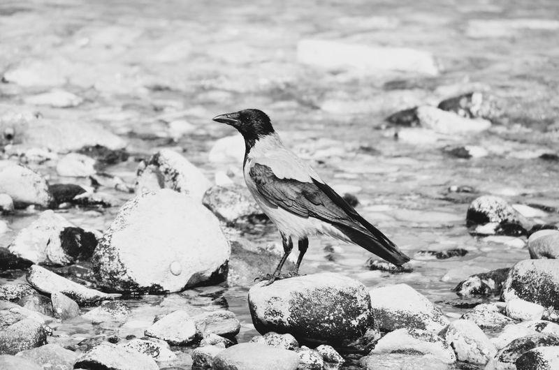 Bird Perching On Stone In Sea