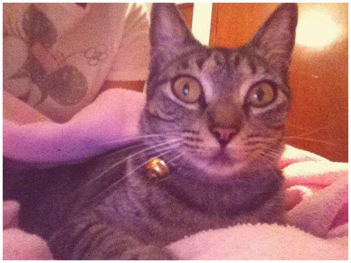 Cat Taga Pretty♡