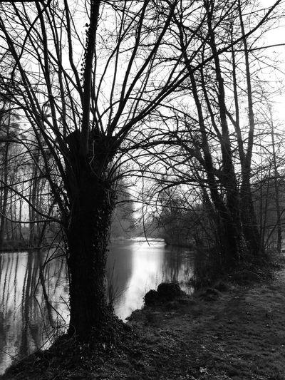 like a horror movie scene Landscape Horror MOVIE River Water Tree Arbre Riviere