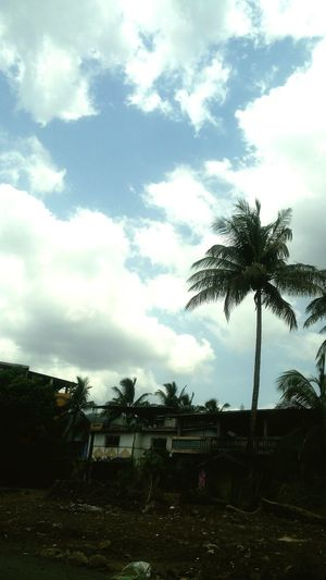Tree Cloud - Sky Palm Tree Sky No People Day Outdoors Beach Nature
