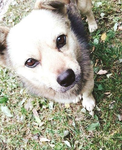 Dog ЧНУ, собачка
