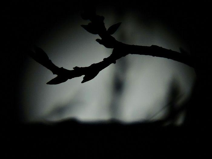 Negative Space Full Moon Moonlight Moonshine Goodnight Moon Nature Nofilter Landscapes EyeEm Moon Shots Scenery Shots
