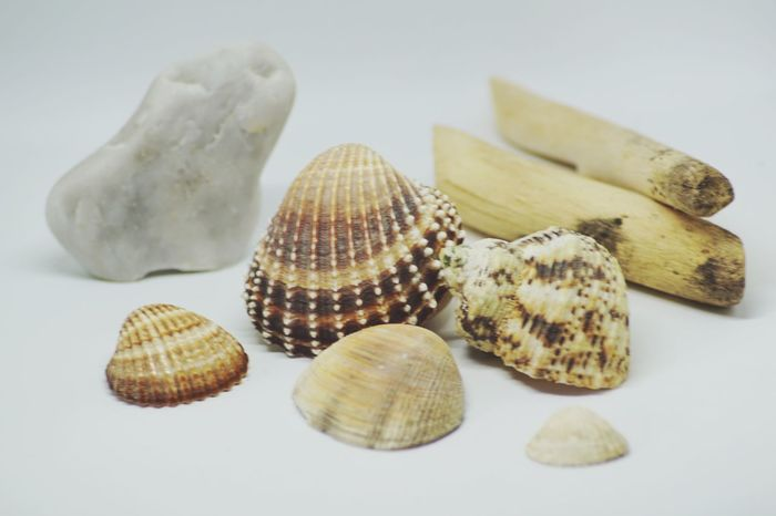 Seashell No People Studio Shot Close-up Nature Indoors  Sea Life Food Animal Themes Shell Shell Photography Shells Beach Biology Beauty In Nature White Background Darkness And Light EyeEm Selects