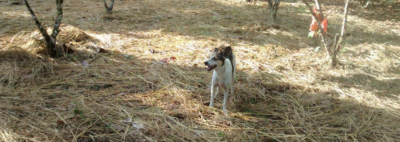 My dog in un bello suelo de oro Pets EyeEm Animal Lover EyeEm Nature Lover EyeEm Best Shots - Nature
