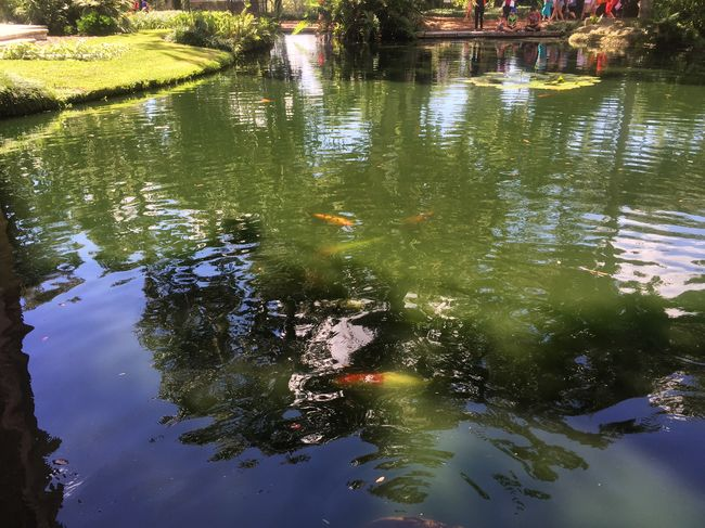 Bok Tower Gardens Water Fish Outdoors Beauty In Nature Peace Ilivewhereyouvacation Listen Within Tadaa Community Tadaa Pocket_family Florida
