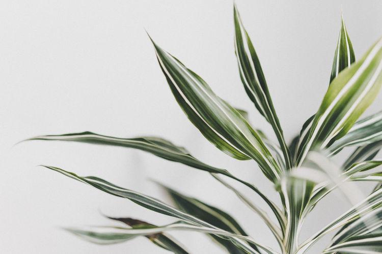 Leaf Leaves Flower Herbal Medicine Close-up Plant Succulent Plant Plant Life Botany