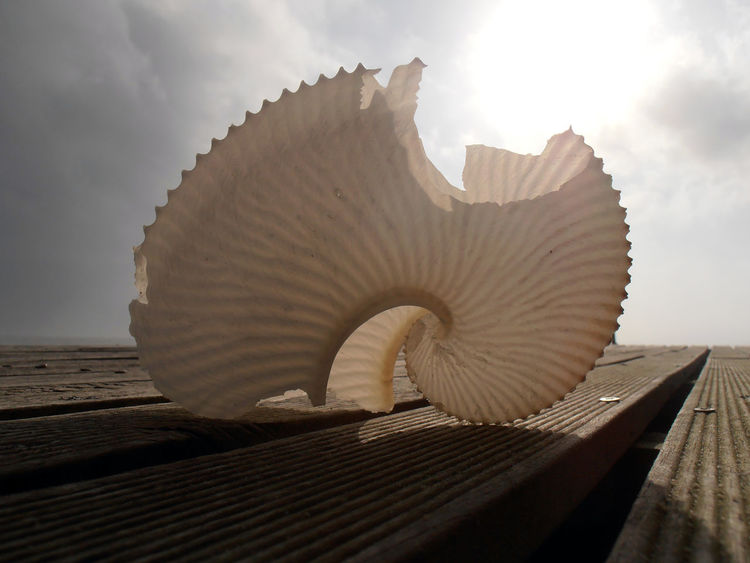 Nautilus Shell Eastern Cape South Africa Nature Nature_collection Pretty Sea Beach Close-up Beach Lifestyle Paper Nautilus Beautiful Nature No People Eastern Cape Broken Fragile