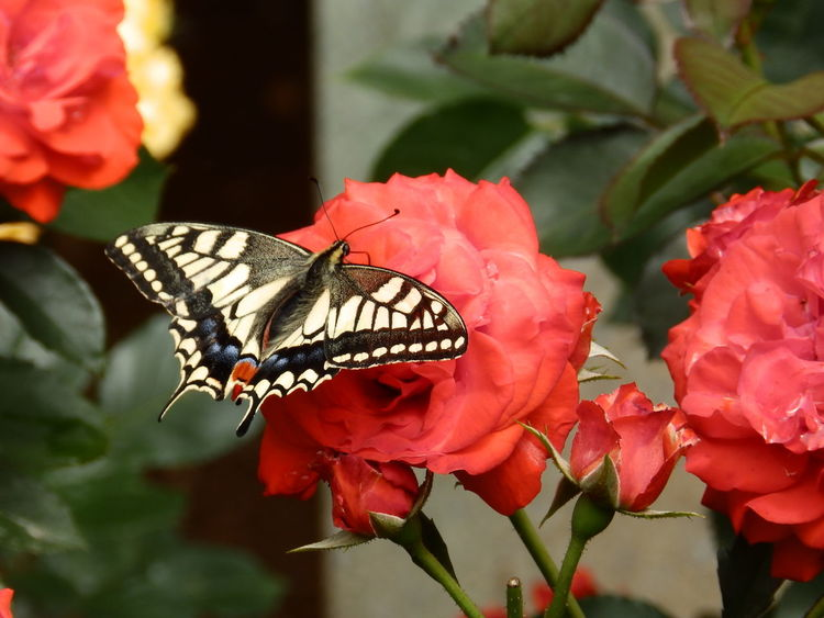 """""""There is no beauty without some strangeness."""" ― Poe 