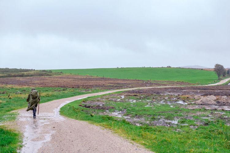 Rear view of horse walking on field