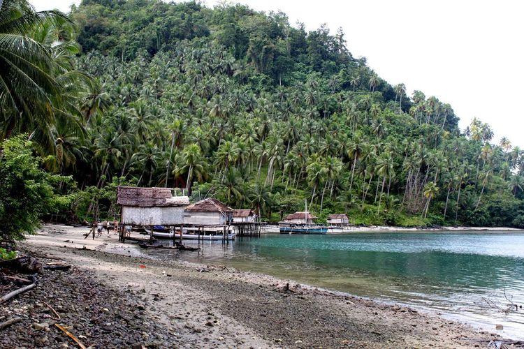 Sulawesi Beach Beauty In Nature Boat Day Fishermen's Life Growth Mode Of Transport Moored Nature Nautical Vessel No People Outdoors River Riverbank Scenics Sky Togian Islands... Tranquil Scene Tranquility Transportation Tree Water Fishermanvillage Fishermanslife