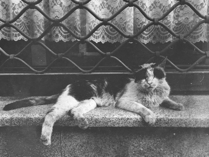 OpenEdit Black & White Cat Suchalonelyday Peace And Quiet
