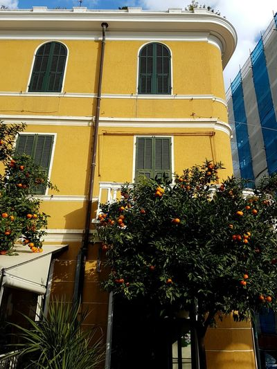 Window Building Exterior Architecture Built Structure Reflection No People Yellow Plant Flower Outdoors Growth Low Angle View Day Tree Sky Orange Fruits Orange Tree Yellowhouse Alassio Branch Growth Adapted To The City EyeEmNewHere
