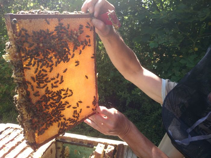 Man holding a beehive folder full of bees