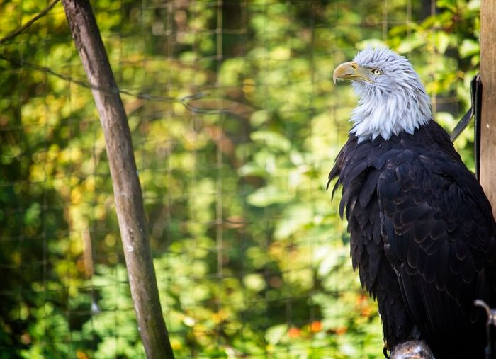 Close-up of eagle in forest