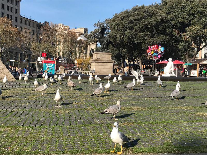 Seagulls Larambla Spain♥