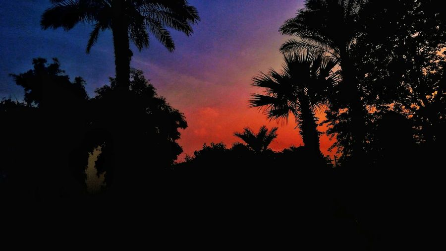 Tree Silhouette No People Sunset Outdoors Pinaceae Sky Nature Pine Tree Tree Area Night Beauty In Nature Palm Tree Astronomy Lifestyles Beauty In Nature Egyptphotography Cityscape Cairo Egypt Architecture Streetphotography Clear Sky Built Structure Nature Silhouette