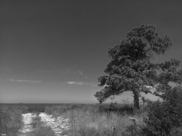 Monochrome Photography Tree Country Path Chesapeake Bay Beauty In Nature Landscape EyeEm Best Shots Picsart_family