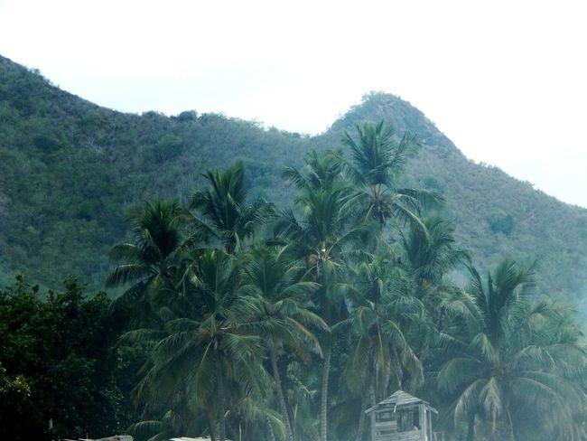 Palmsprings Palm Tropical Paradise Tropical Venezuela Nature Photography Tree No People Mountain Beauty
