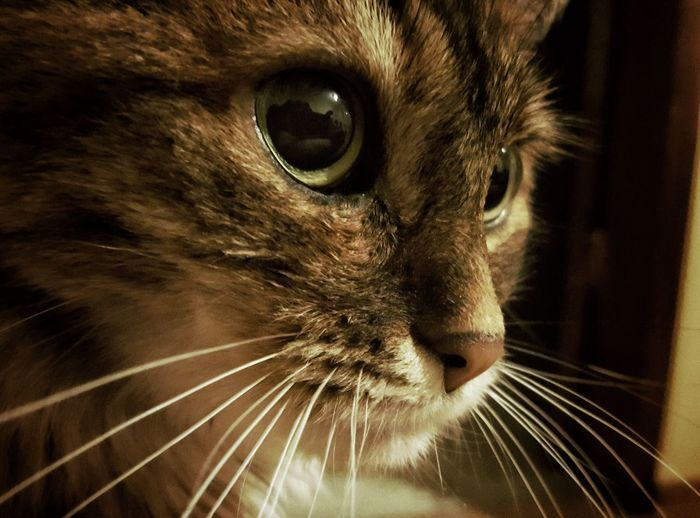 Cat Animal Eye Looking Away Animal Head  Portrait Day Photo Photography