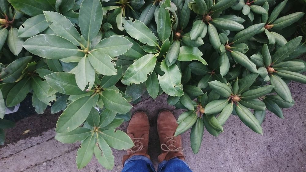 Garden center trip. Garden Center Plants Bird Photography Bird View POV Point Of View Shoes Feet And Plants This Is Where I Live... My Hood Green And Brown View From Above