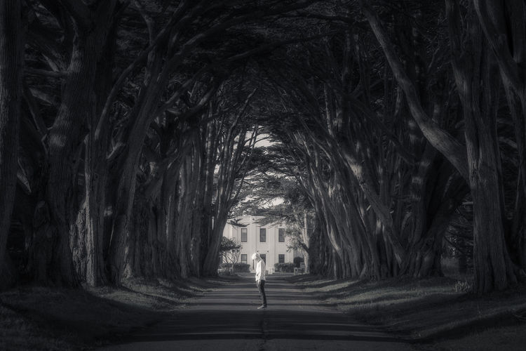 Time Traveler Capture The Moment Nature Road Taking Photos Travel Tree Beauty In Nature Bestoftheday Blackandwhite Enjoying Life Forest Landscape Light And Shadow Selfie Time Travel Destinations Tunnel