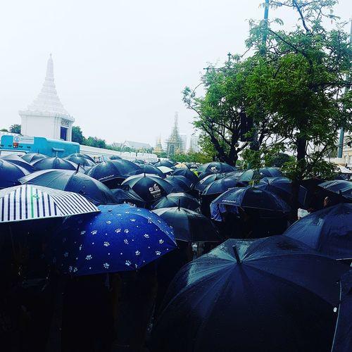Tree City Sky Rain Rainy Season Umbrella EyeEmNewHere