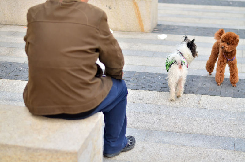 Rear view of woman with dog walking on steps