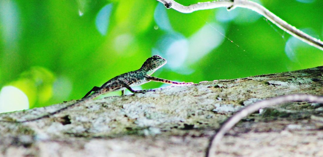 Escape on Process Wildlife & Nature Mood Philippines EyeEm Photography EyeEm Gallery Tree Animal Wildlife Reptile Animals In The Wild Green Color Lizard Outdoors