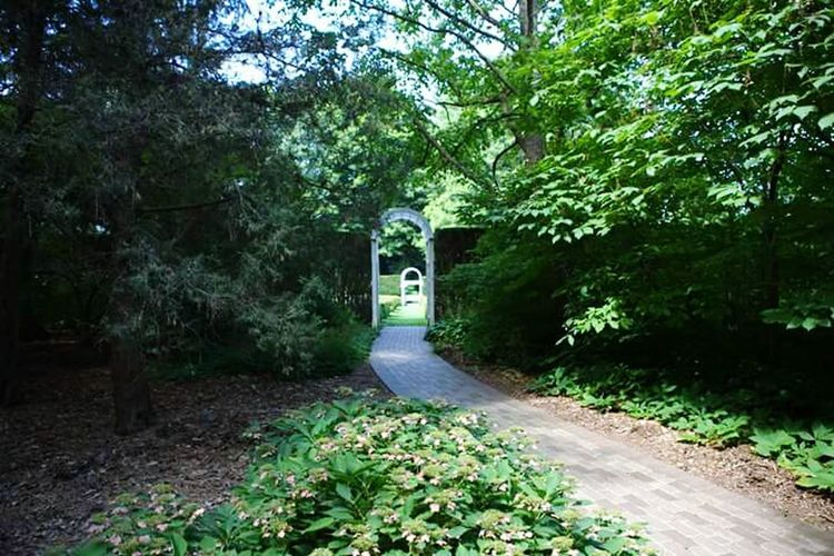 Path to the garden Path To The Garden Arch Way Shrubs Greenery Trees Outdoor Photography Serene Outdoors