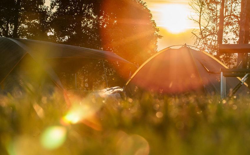 Close-up of sun shining through tree during sunset