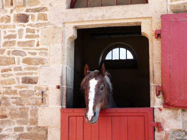 Haras D Hennebont Architecture Domestic Animals Haras Horse Horse Head Horse Head Tete Prolonge Par Liste Horse Theme One Animal One Horse Tete De Cheval Red Doors Red Doors And Windows Stable Architecture
