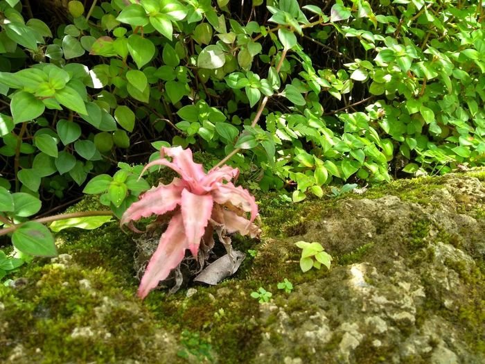High angle view of pink flowering plant on field