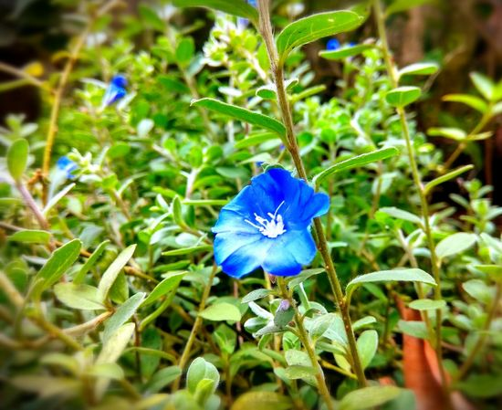 Nature Growth Flower Outdoors Blue
