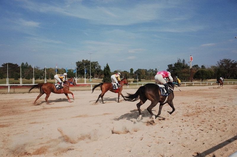 Horse Horseback Riding Running Domestic Animals Only Men Adult Riding Sky Day Outdoors