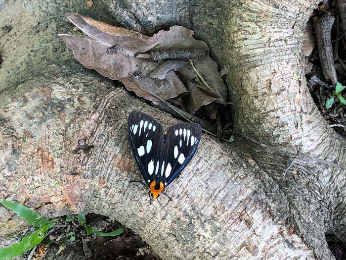 Animal Animal Themes No People Animal Wildlife Animals In The Wild Invertebrate Insect Animal Wing Butterfly - Insect One Animal Nature Butterfly