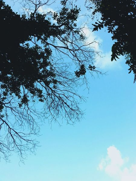 Blue Sky Photooftheday Indonesia_photography INDONESIA Photography Street Photography Solo City Surakarta Beautiful Indonesia Trees Visit Indonesia IndonesiaPhotography Sky And Clouds Lovely Weather Fresh Air Nature Fresh Air <3