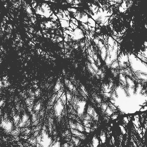 Fresh Branch Backgrounds Full Frame Silhouette Sky Leaf Vein Treetop First Eyeem Photo